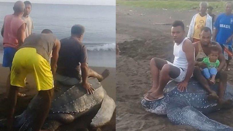Οργή προκαλεί βίντεο με θαλάσσια χελώνα - Την καβαλάνε και την ποδοπατούν ανελέητα – VIDEO